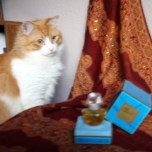 My favorite cat Rusty & my favorite perfume Climat by Lancome