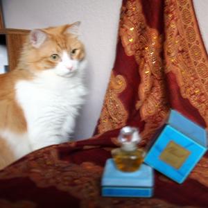 My favorite cat Rusty & my favorite perfume Climat