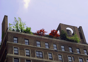 Garden on the rooftop
