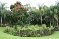 Mauka Coffee Farm