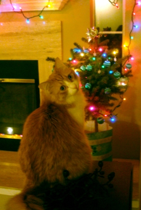 Rusty & Christmas Tree