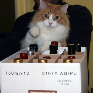 Rusty paw inspects wine bottles