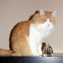 Vera Wang perfume and my cat Rusty