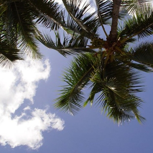 Sky and palm