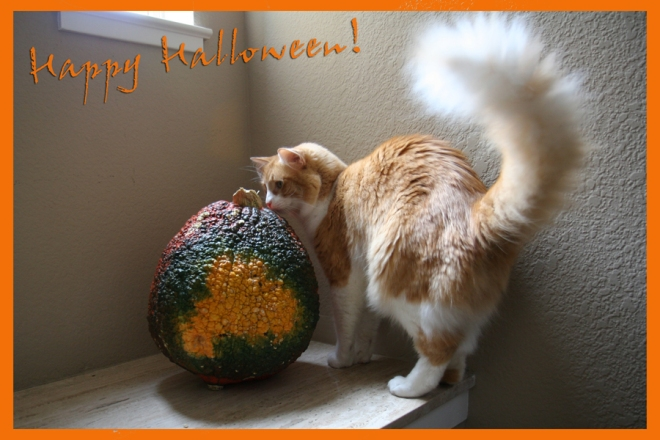 Halloween: Rusty's planning a world domination
