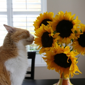 Rusty And Sunflower