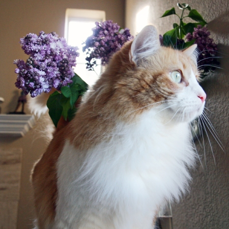 Rusty And Lilacs