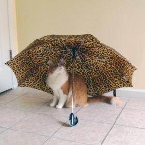 Rusty and umbrella