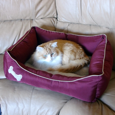Rusty in His New Bed