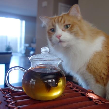 Rusty and Flowering Tea