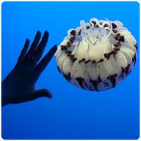 Undina's Hand & Jellyfish