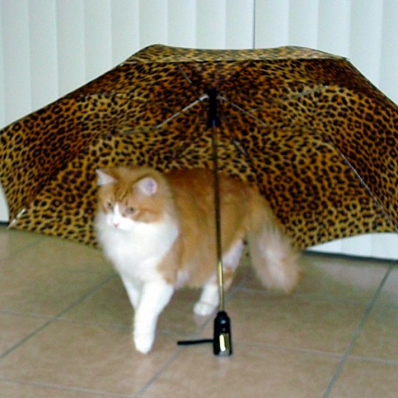 Rusty and Umbrella