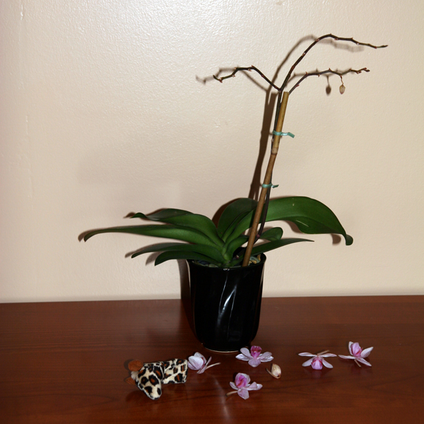 Orchids Haven T Started Blooming Yet Undina S Looking Glass