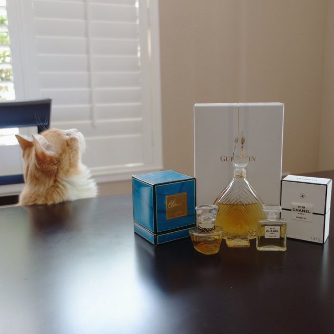Rusty and Climat, Chamade and Chanel No19