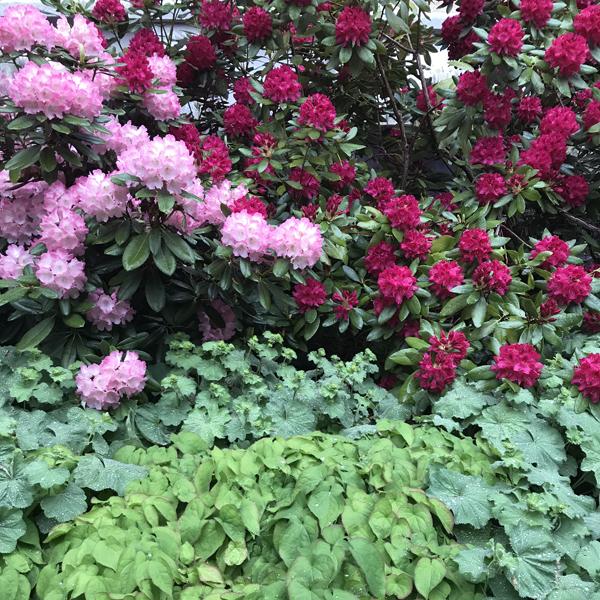 Centralbadet Park Flowers