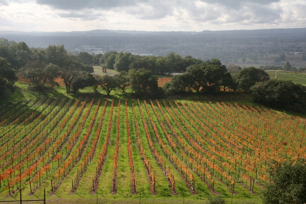 View from the Paradise Ridge Winery Tasting Room