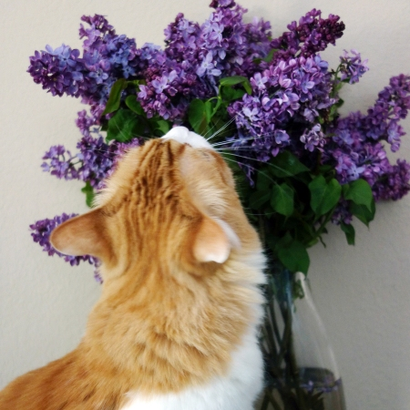 Rusty and Lilac