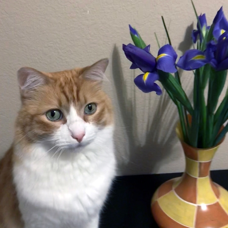 Rusty and Irises