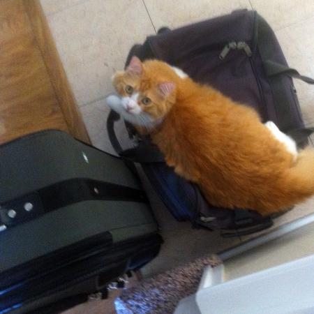 Rusty and Two Suitcases