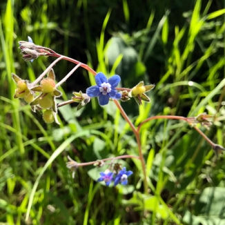 Wildflowers of the Edgewood Park & Natural Preserve, CA