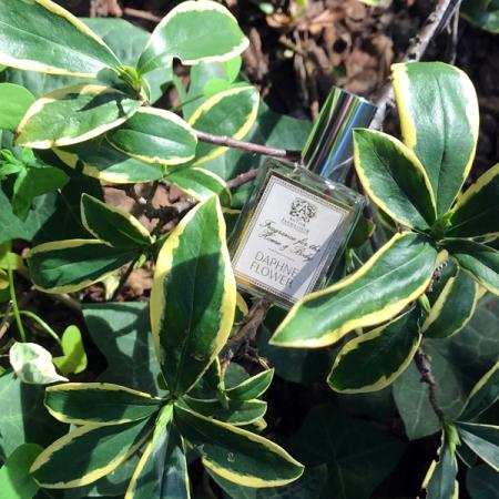 Antica Farmacista Daphne Flower Perfume