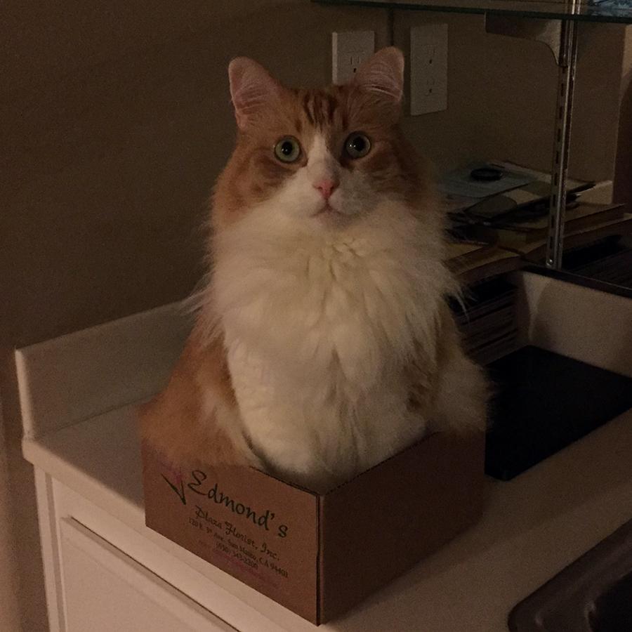Rusty in a Box