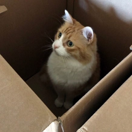 Rusty in a Box