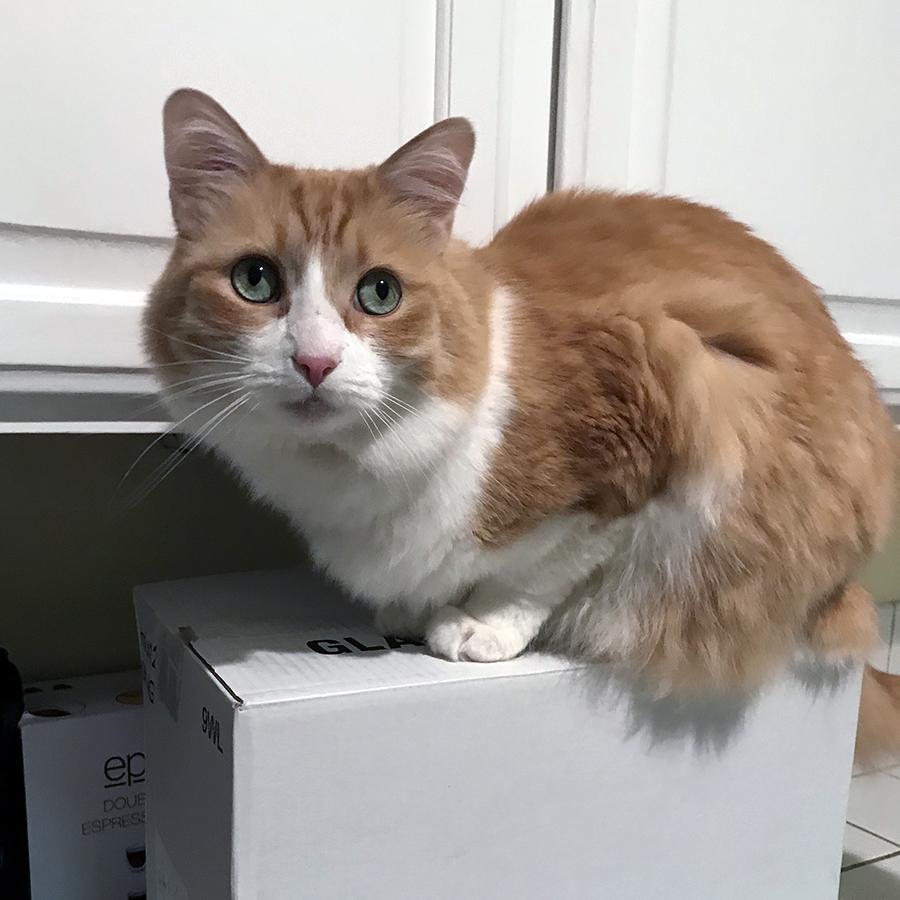 Rusty on a Box