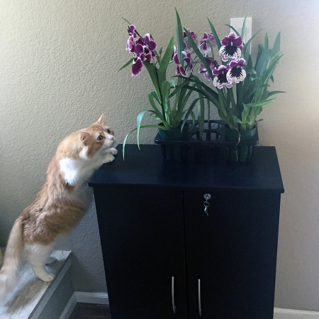 Rusty and Orchids