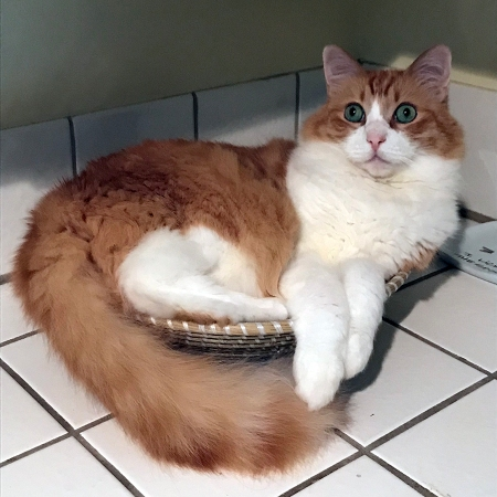 Rusty in a Bowl