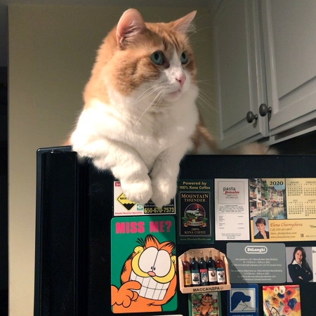 Rusty on the Fridge