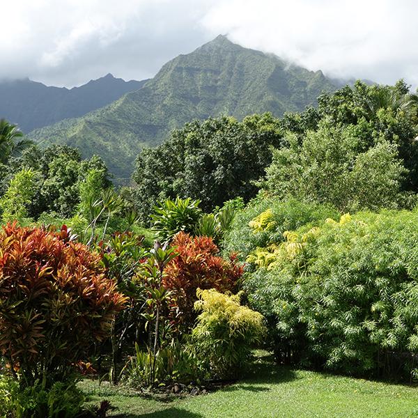 Kawaii Hawaii