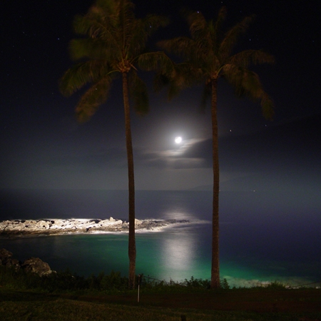 Palm Trees and Moon Maui Hawaii