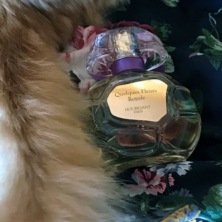 My cat Rusty's tail and Houbigant Quelques Fleurs Royale Collection Privee