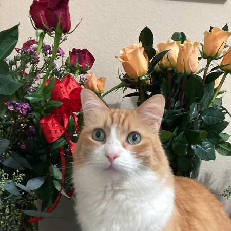 Cat Rusty and Roses