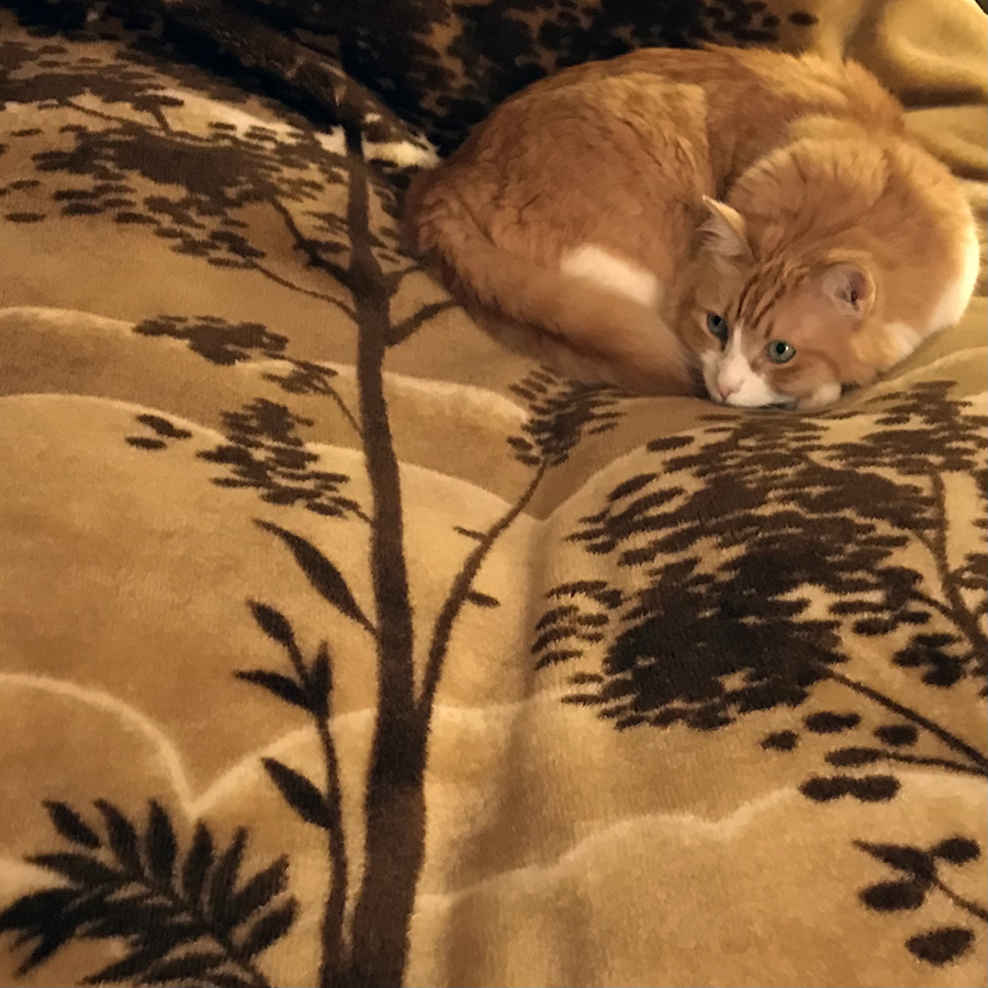 Rusty and a Matching Bed Cover