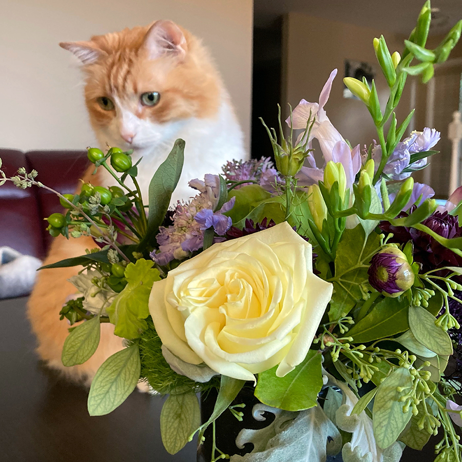 Rusty and Bouquet