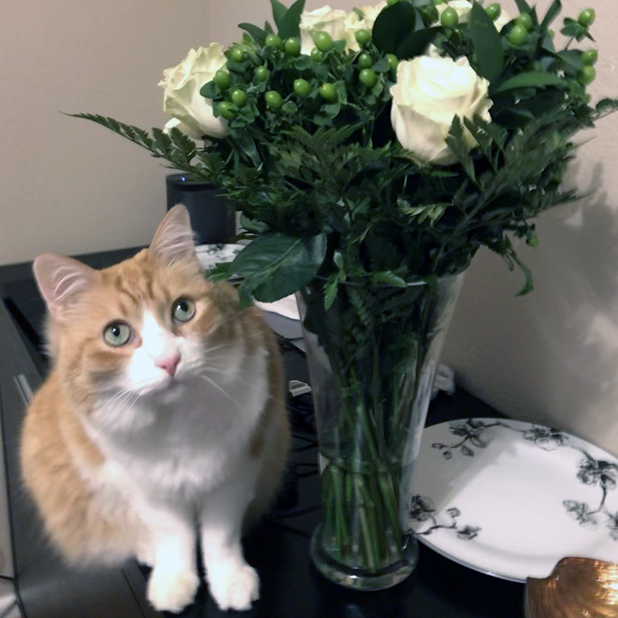Rusty and Roses